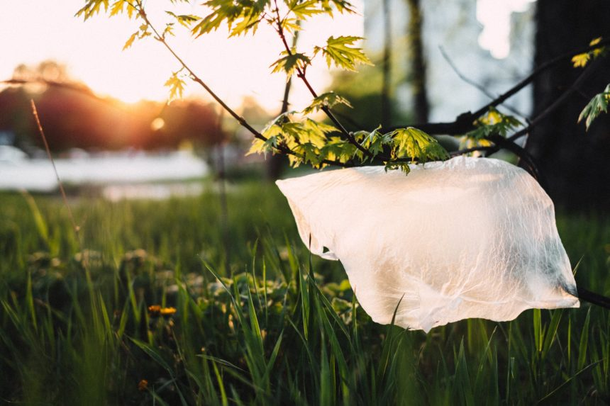 We're Going Plastic-Free in July – Are You?
