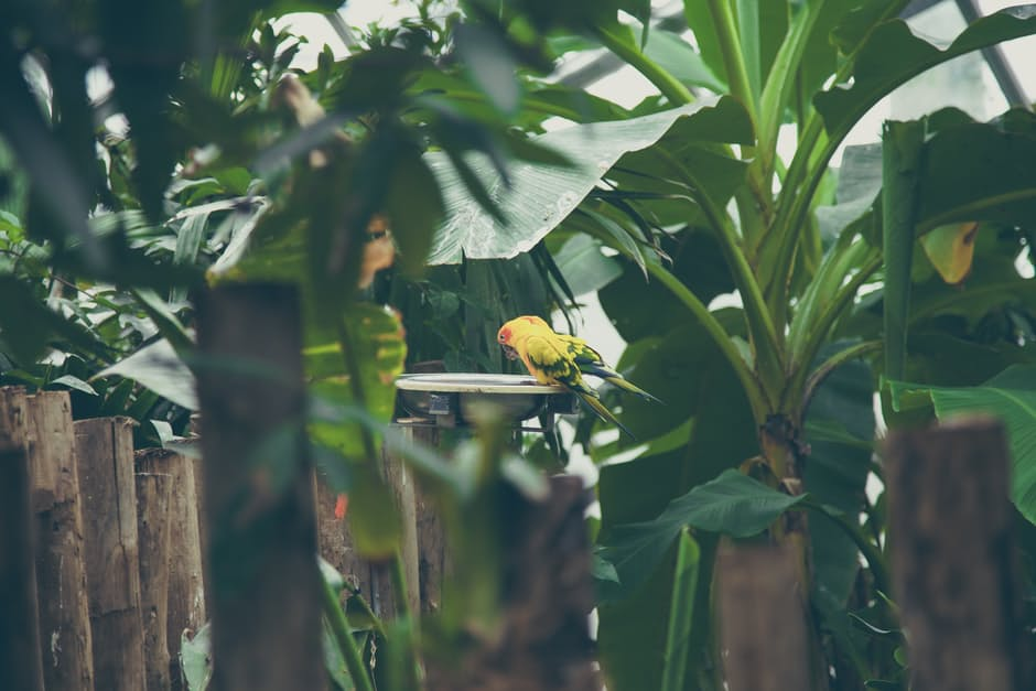 how-to-grow-an-eco-friendly-garden-that-attracts-birds