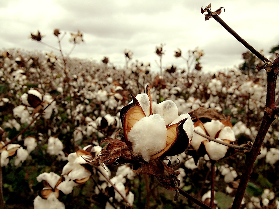 Fashion & Sustainability: Just How 'Sustainable' is Organic Cotton?