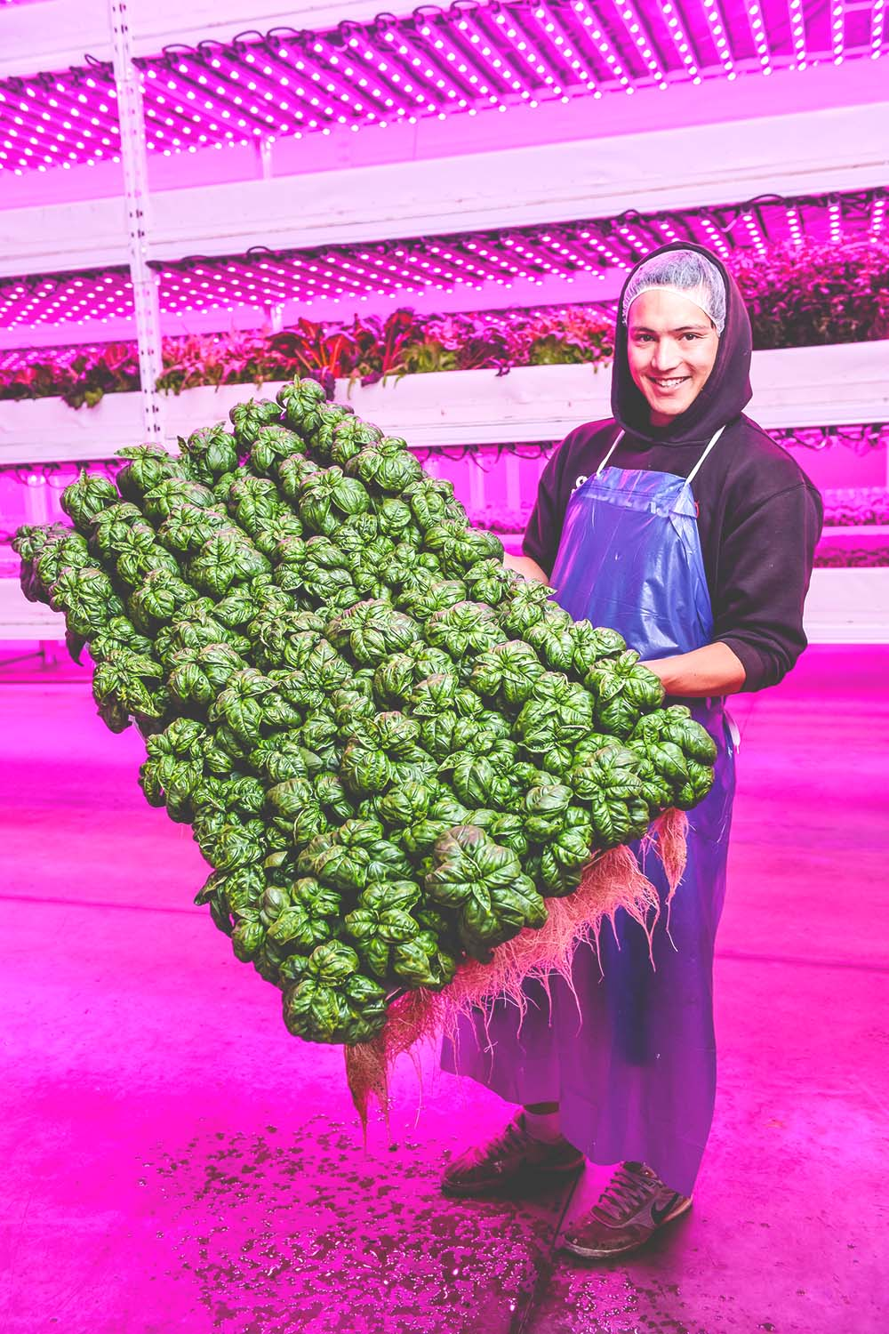 EWP_A Beginners Guide to Vertical Farming from Business Wire