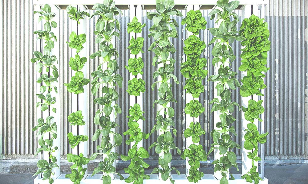 A Beginner's Guide to Vertical Farming
