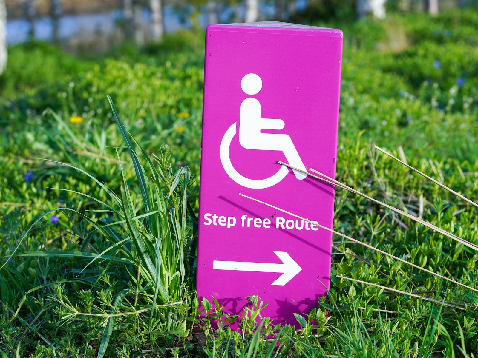 Eco-Ableism: What It Is, Why It Matters and How It Affects Disabled People