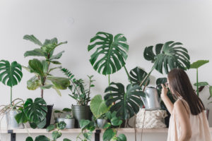 Stylish Ways to Decorate Your Home and Office with Plants