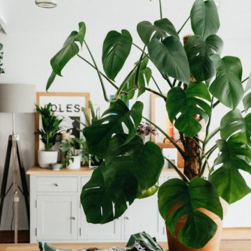 10 Ways to Style Your Indoor Space with Plants, Flowers and Greenery