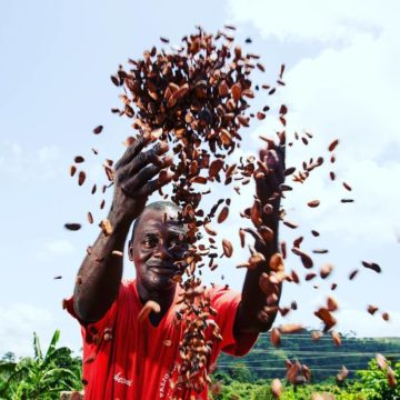 Will Ghana's New Cocoa-Chocolate Policy Change the Game?