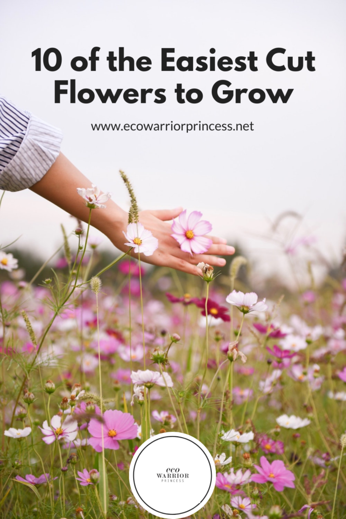 10 of the Easiest Cut Flowers to Grow